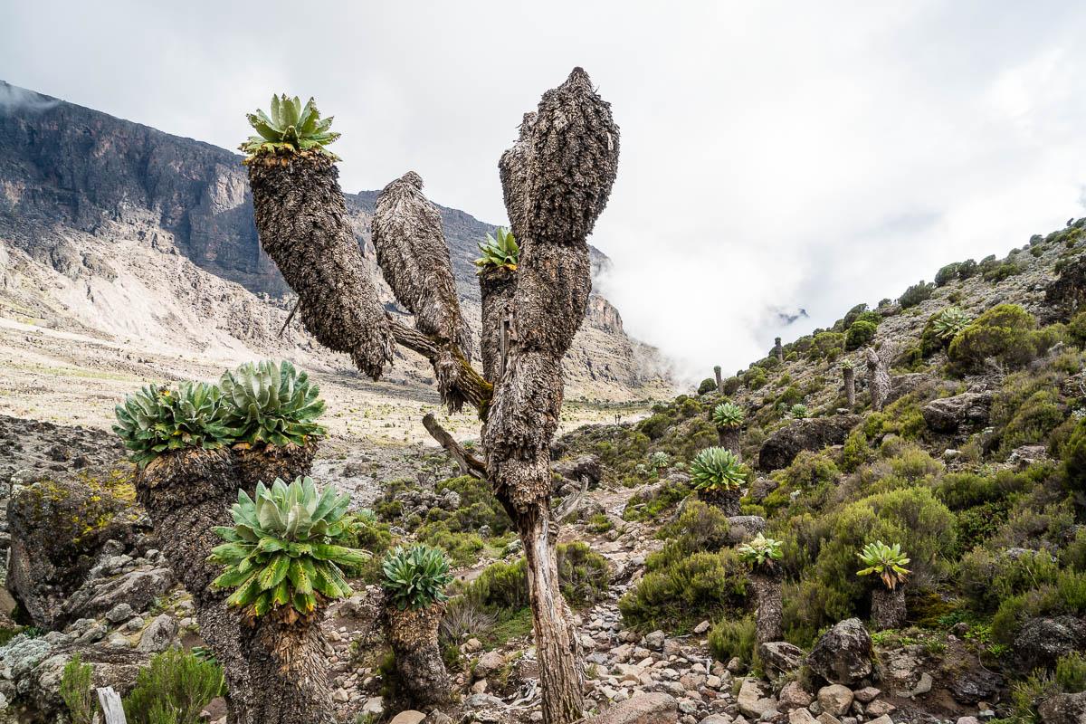 kilimanjaro-gogogo-27