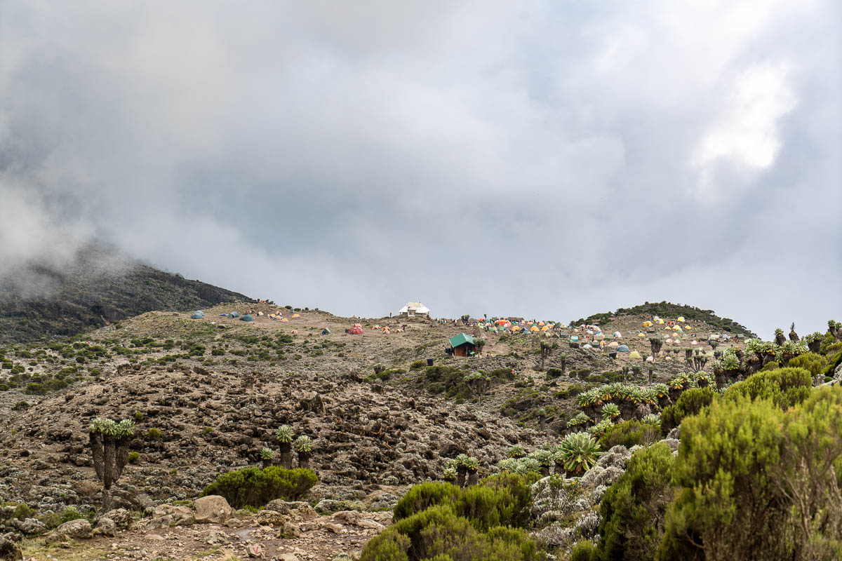 kilimanjaro-gogogo-29