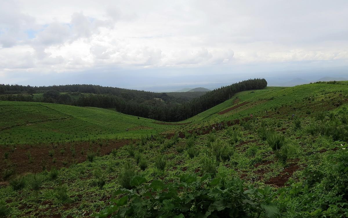 kilimanjaro-ogorod-5