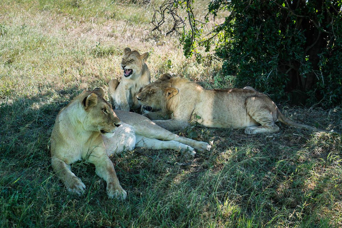 tanzania-safari-2
