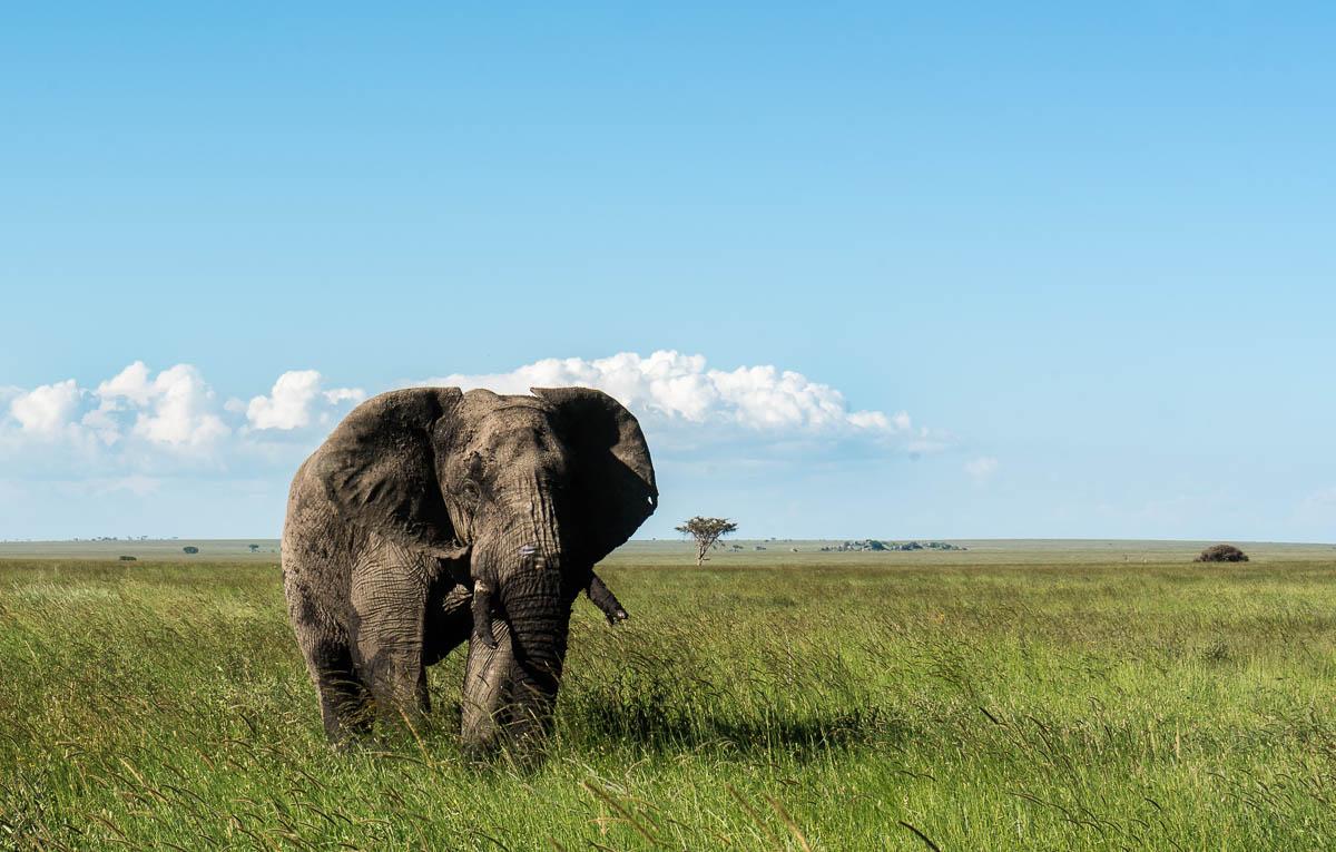 tanzania-safari-3