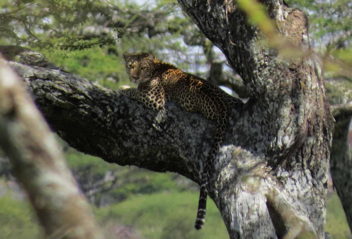 tanzania-safari-5