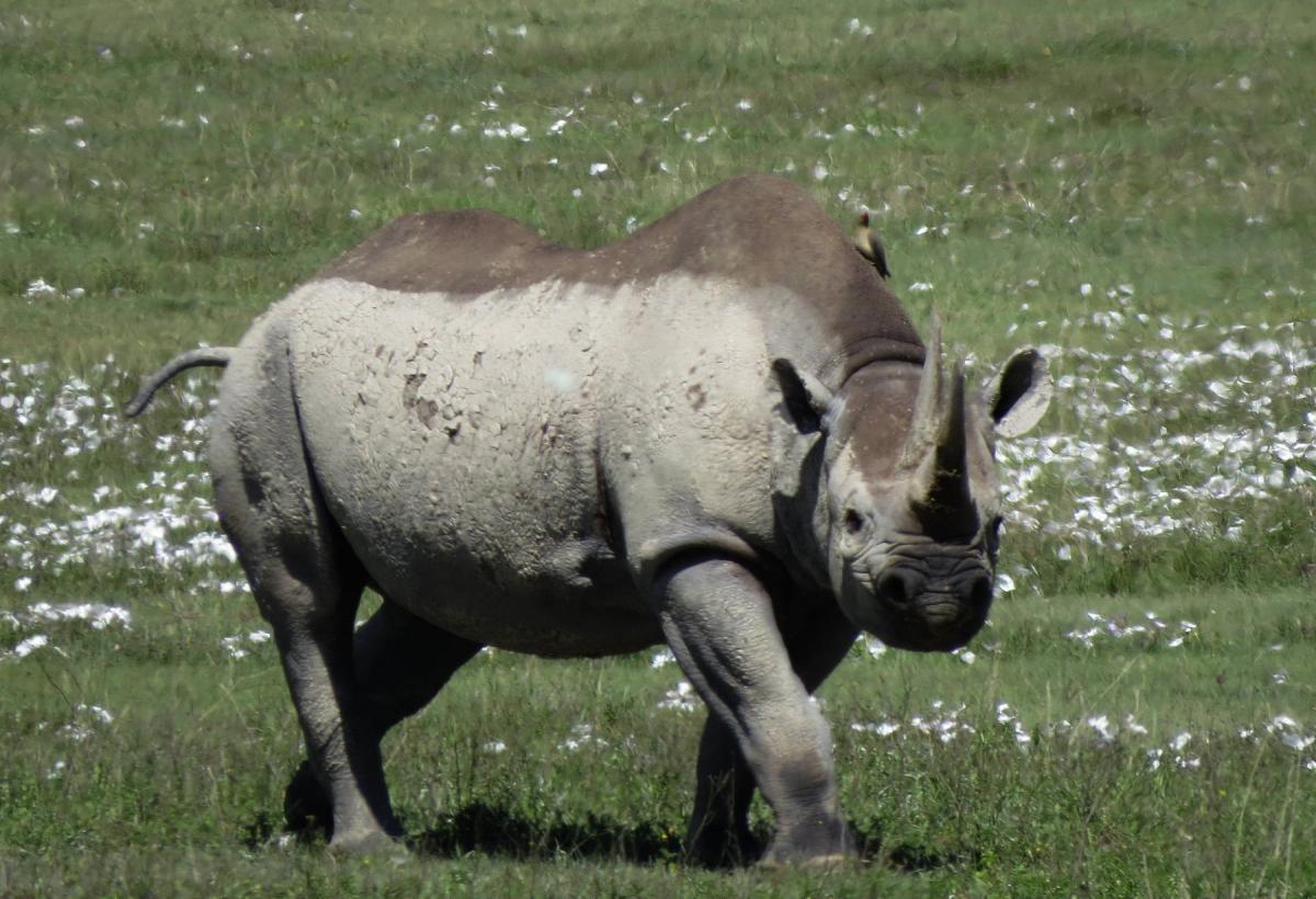 tanzania-safari-6
