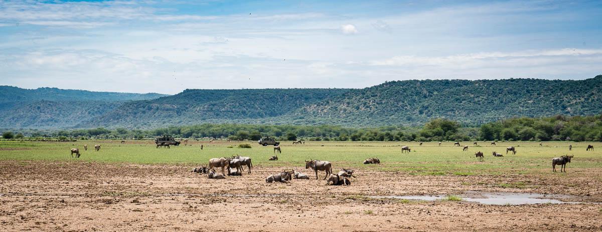 tanzania-safari-9
