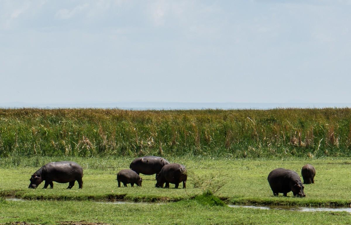 tanzania-safari-10