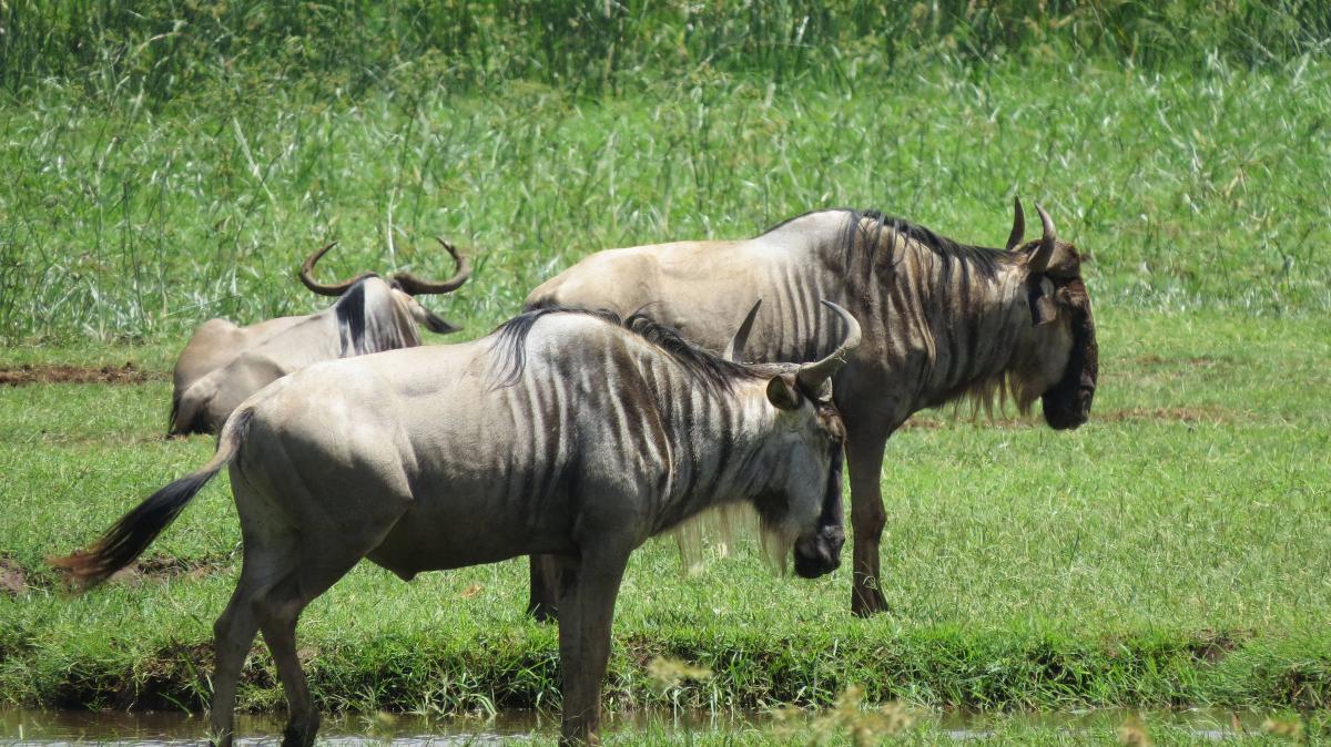 tanzania-safari-12