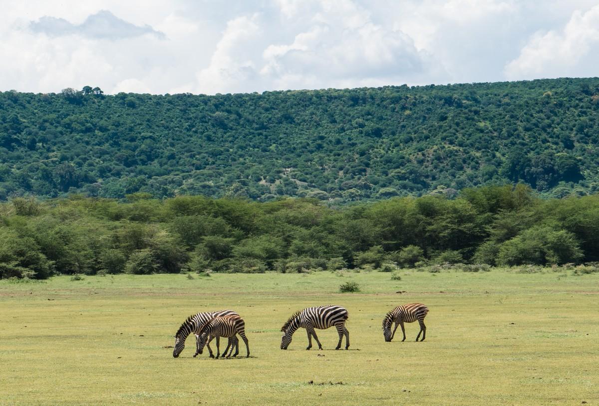tanzania-safari-16