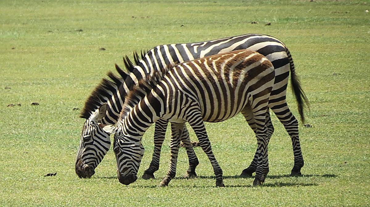 tanzania-safari-17