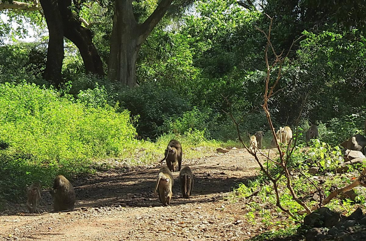 tanzania-safari-18