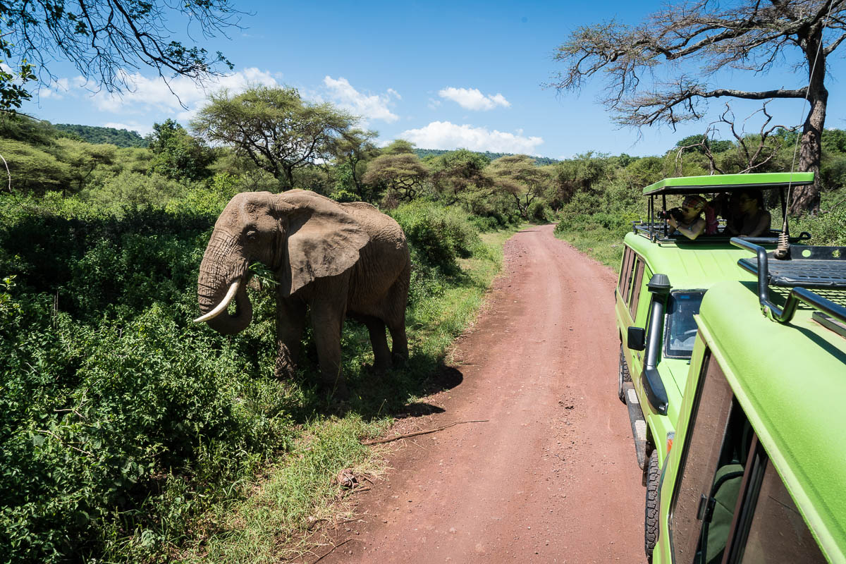 tanzania-safari-19