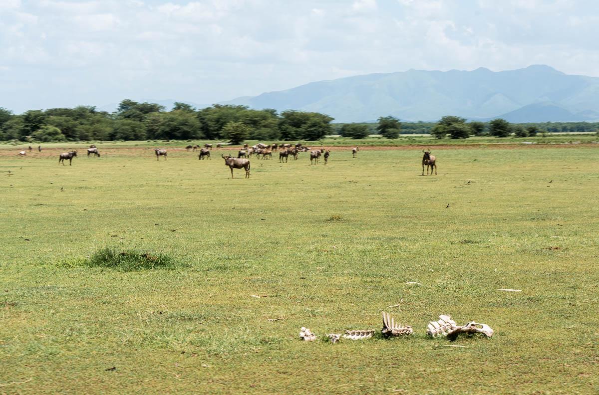 tanzania-safari-21