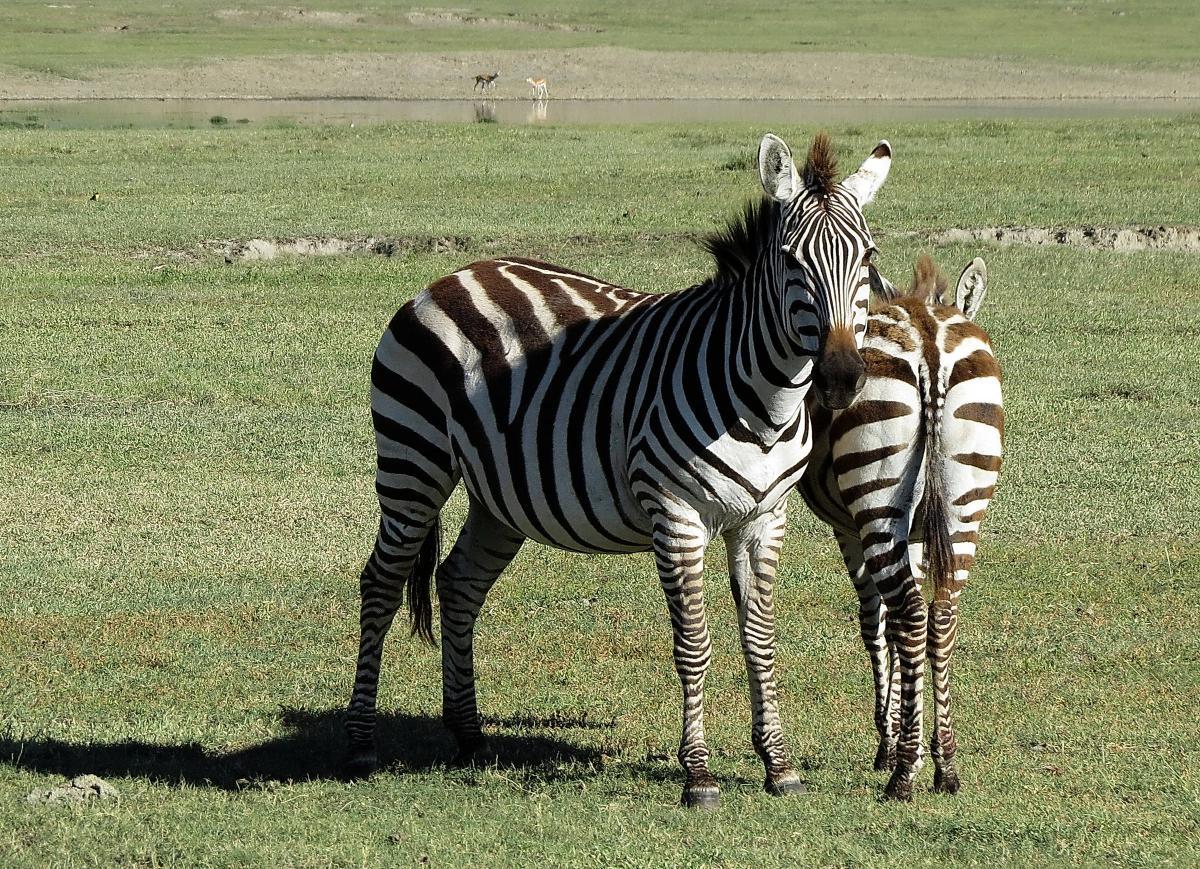 tanzania-safari-30