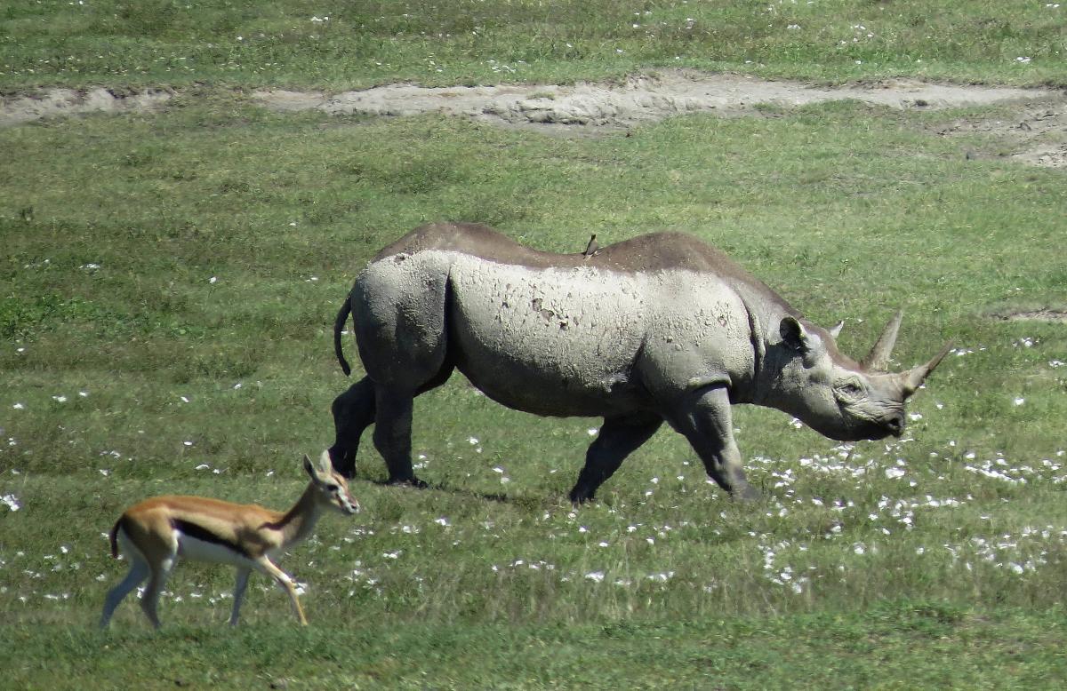 tanzania-safari-36