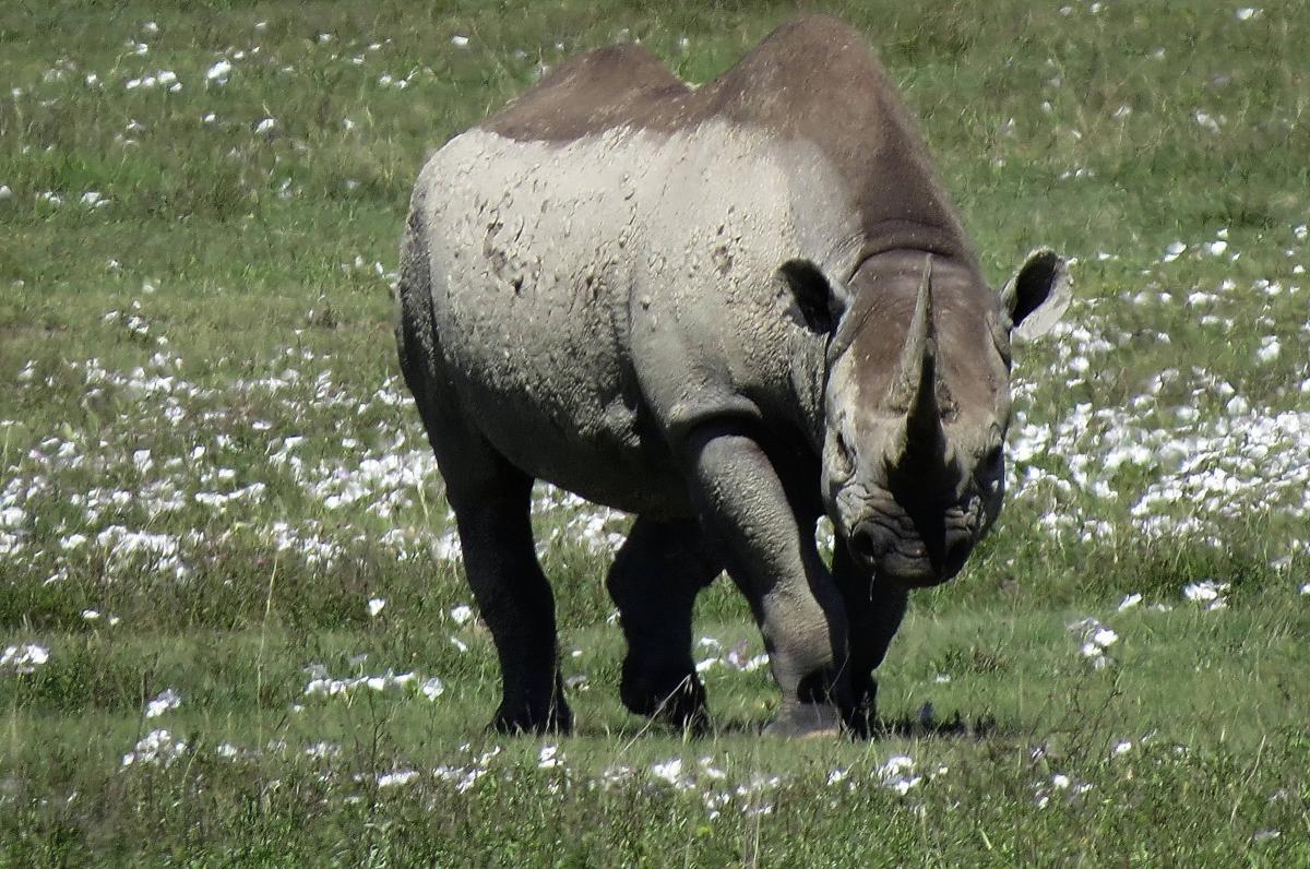 tanzania-safari-37