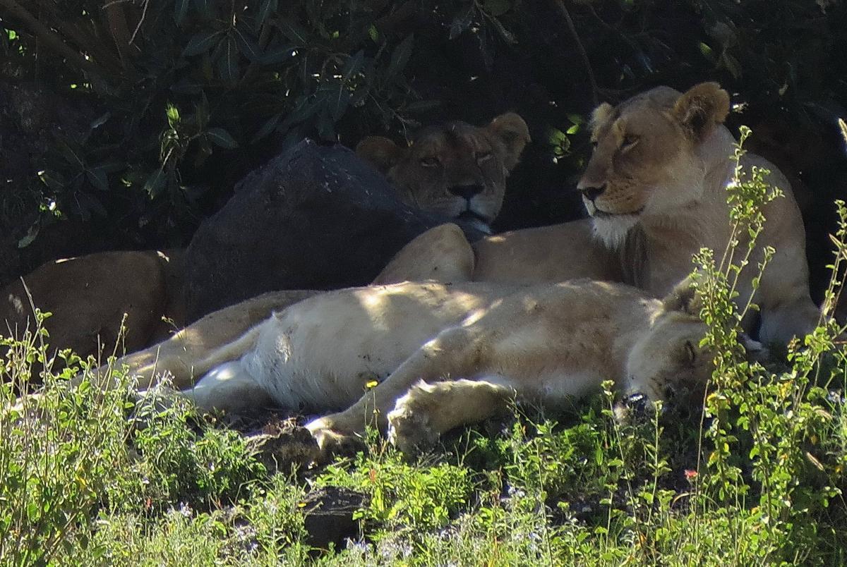 tanzania-safari-39