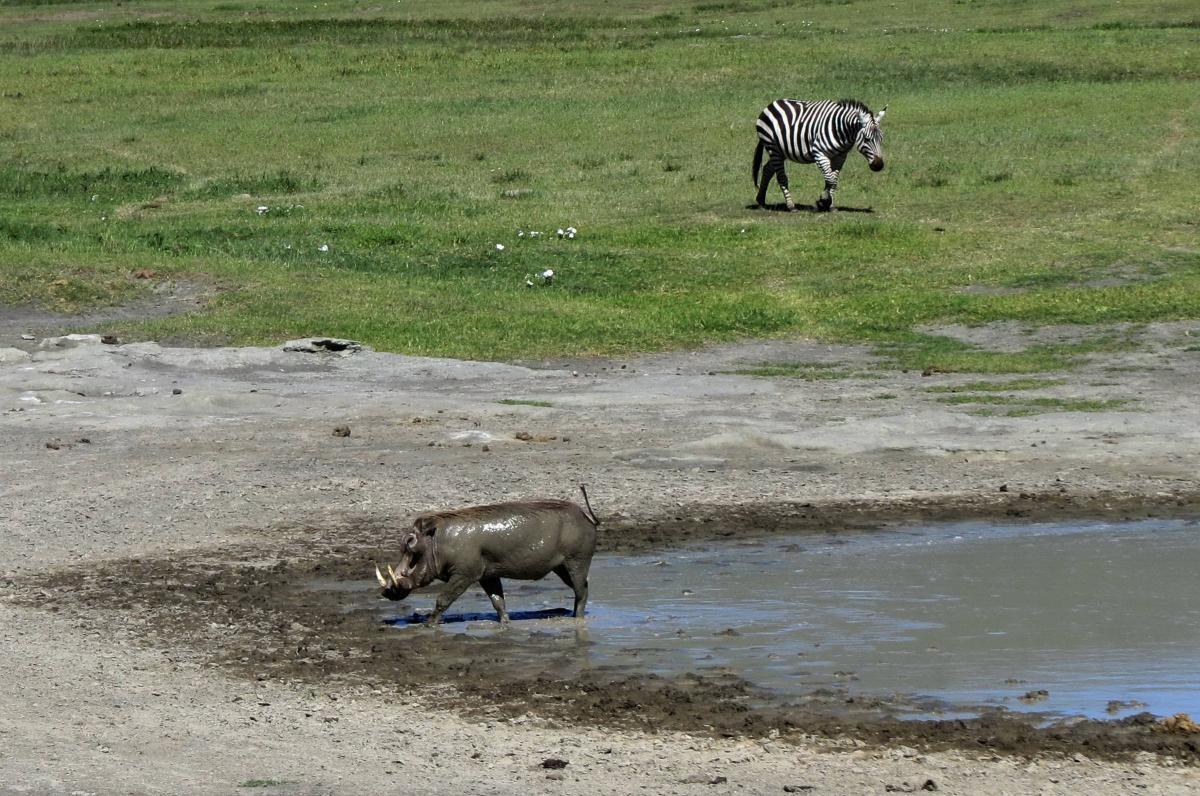 tanzania-safari-40