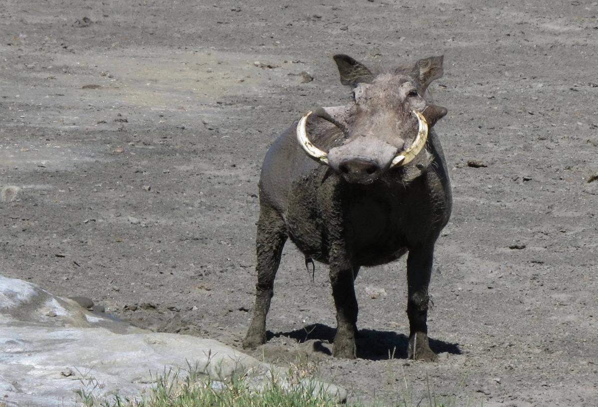 tanzania-safari-41
