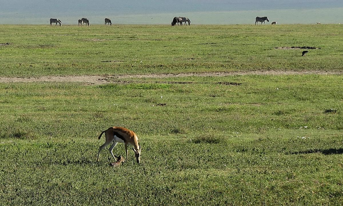 tanzania-safari-42