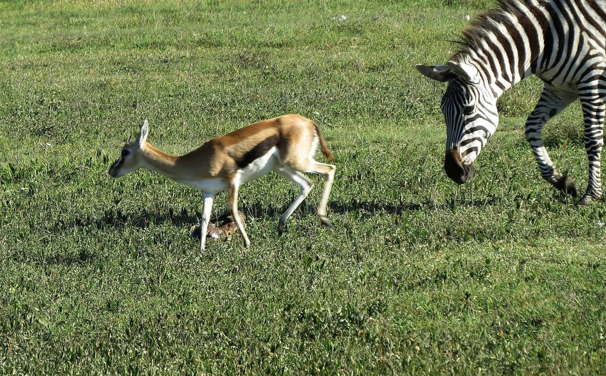 tanzania-safari-43