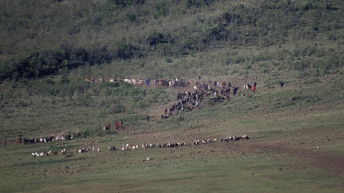 tanzania-safari-45