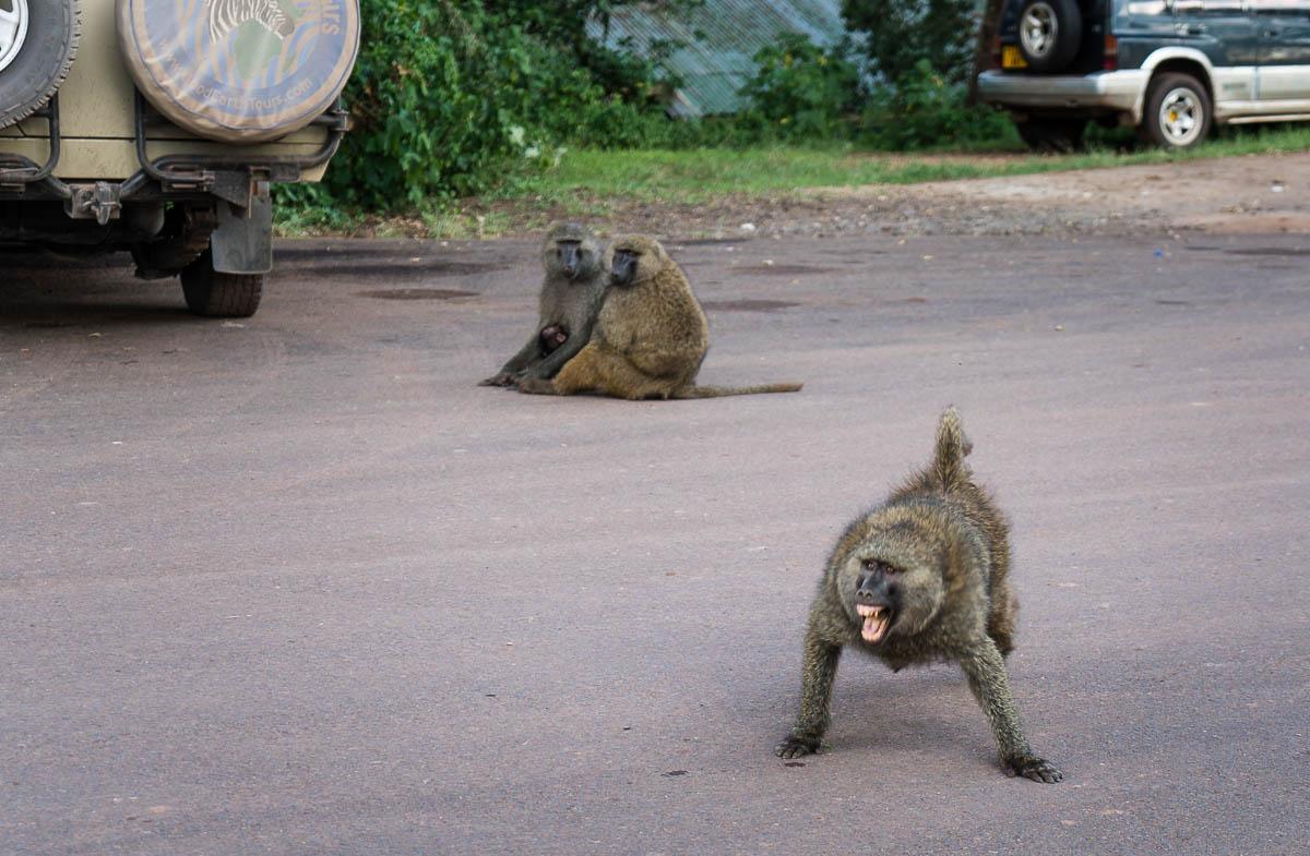tanzania-safari-46