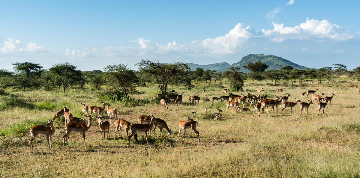 tanzania-safari-49