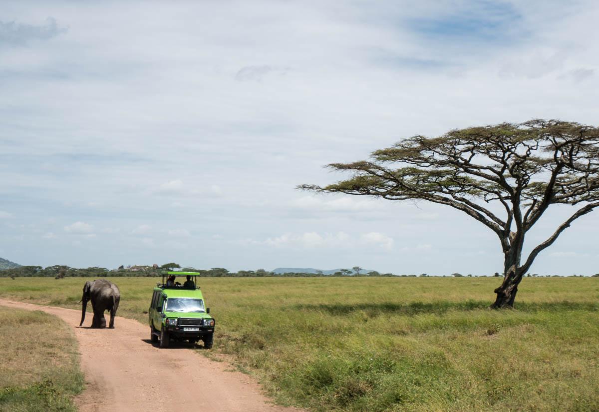 tanzania-safari-50