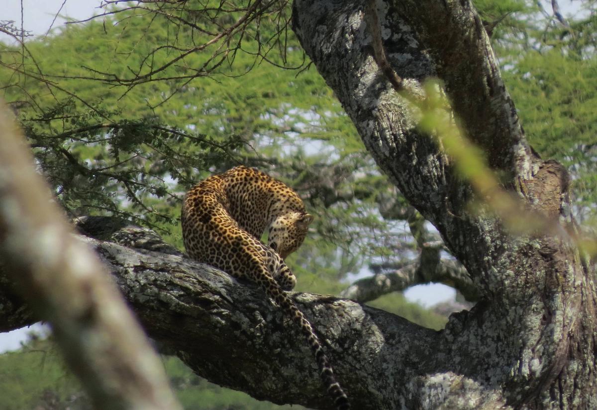 tanzania-safari-51