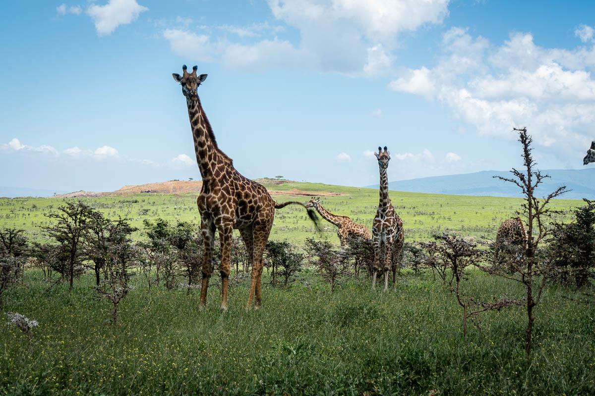 tanzania-safari-53