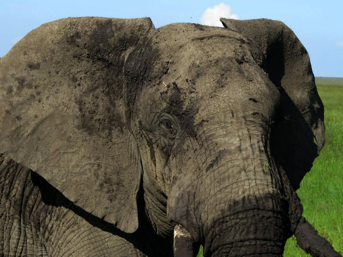 tanzania-safari-57