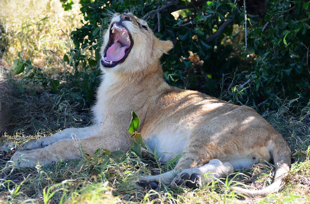 tanzania-safari-58