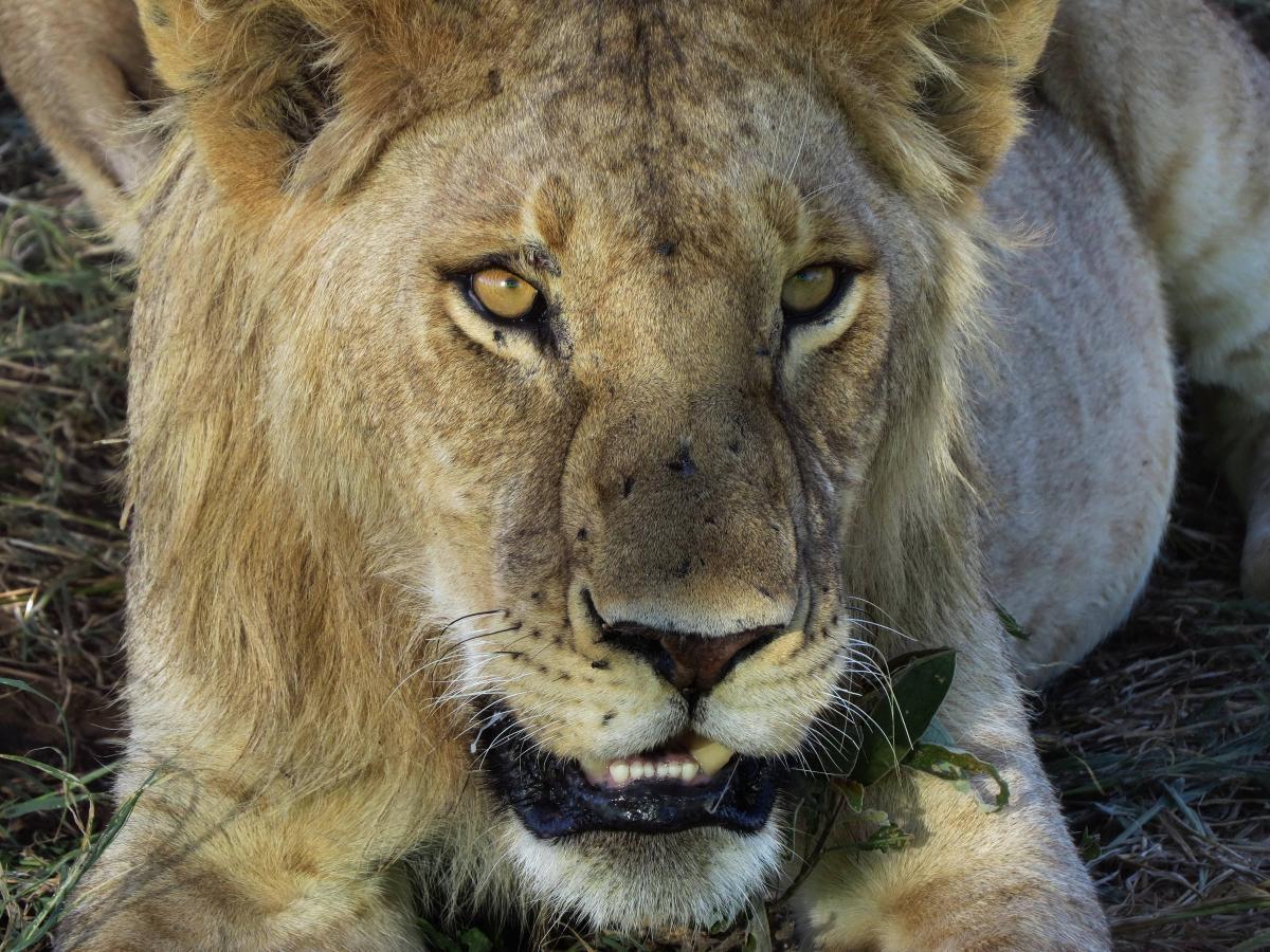 tanzania-safari-59