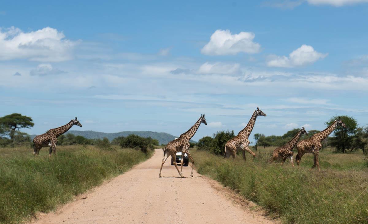 tanzania-safari-60