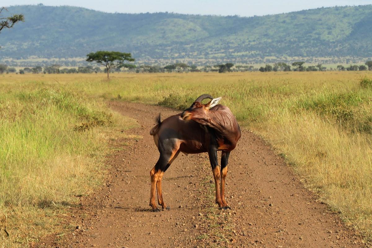 tanzania-safari-61