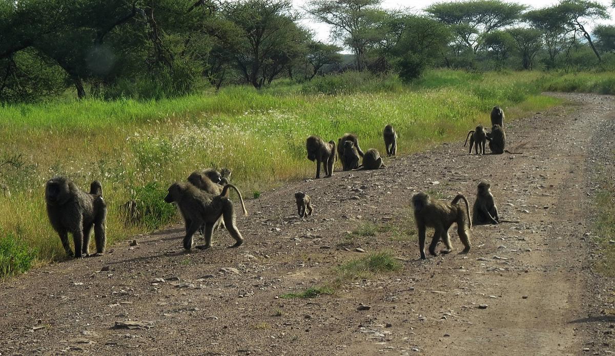 tanzania-safari-62