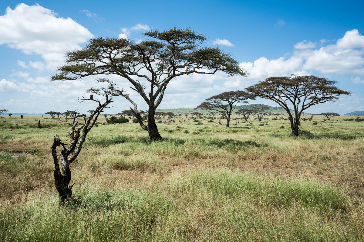 tanzania-safari-65