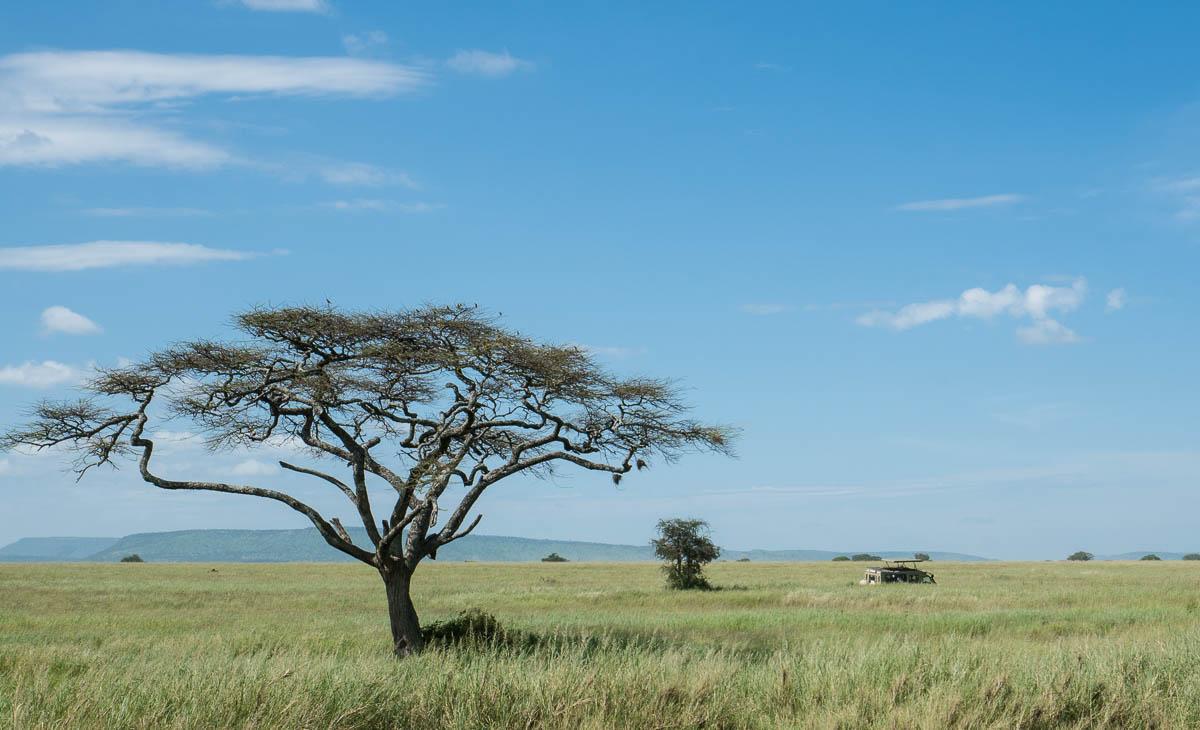 tanzania-safari-66