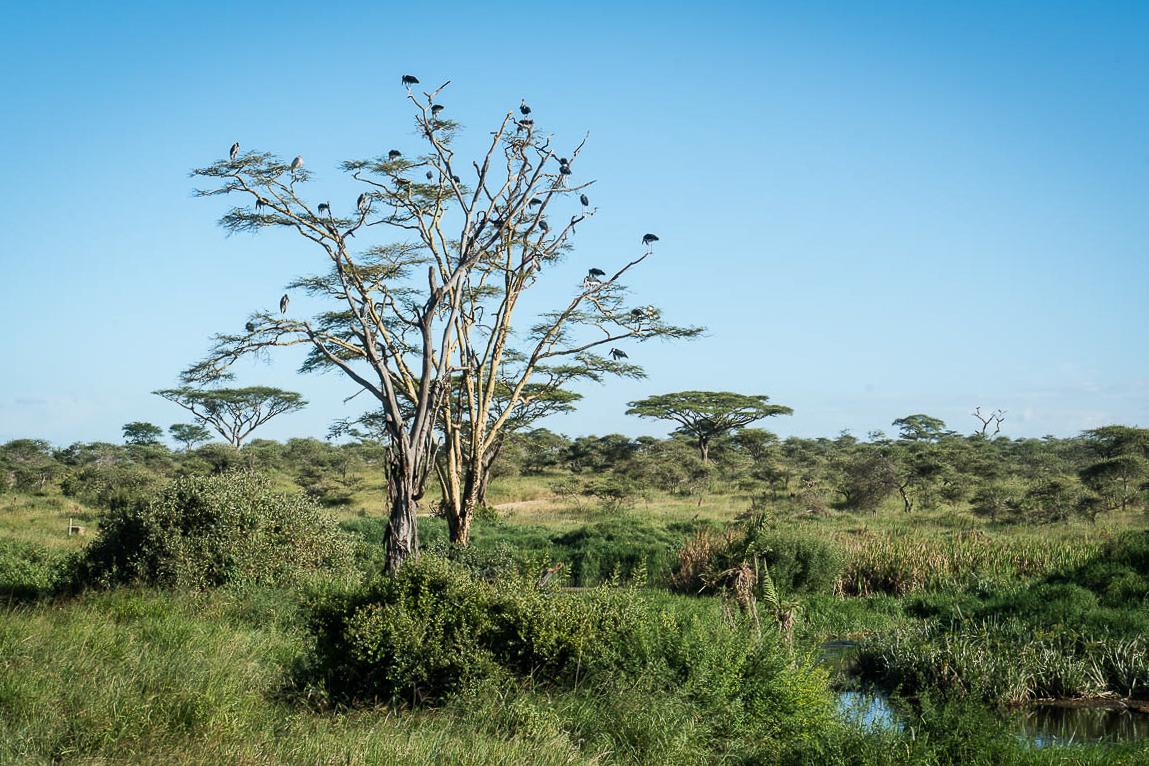 tanzania-safari-73