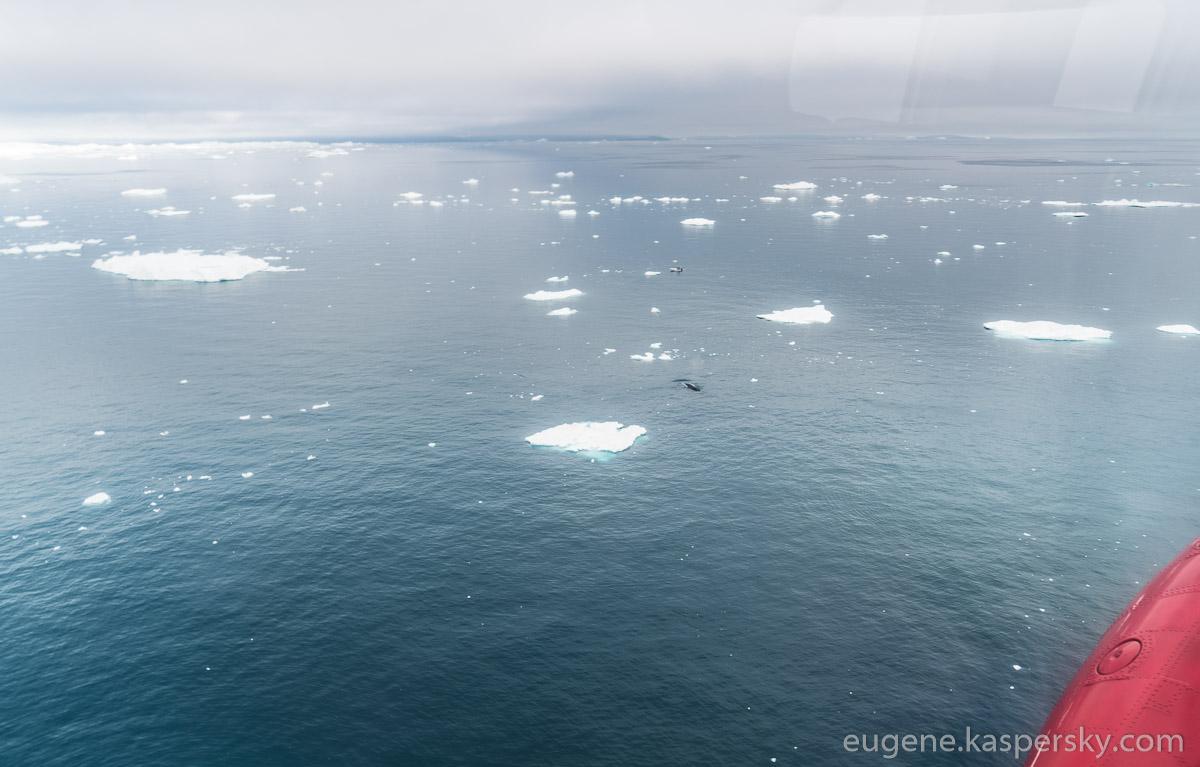 greenland-icebergs-glaciers-69