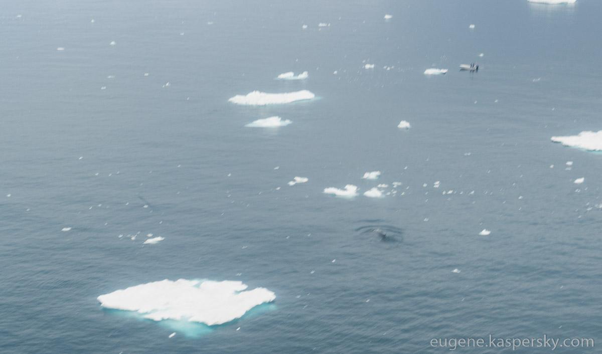 greenland-icebergs-glaciers-70