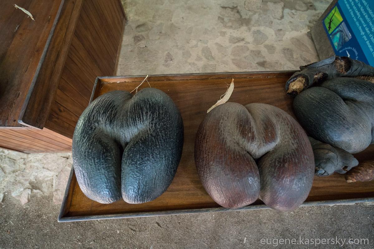 seychelles-coconut-1