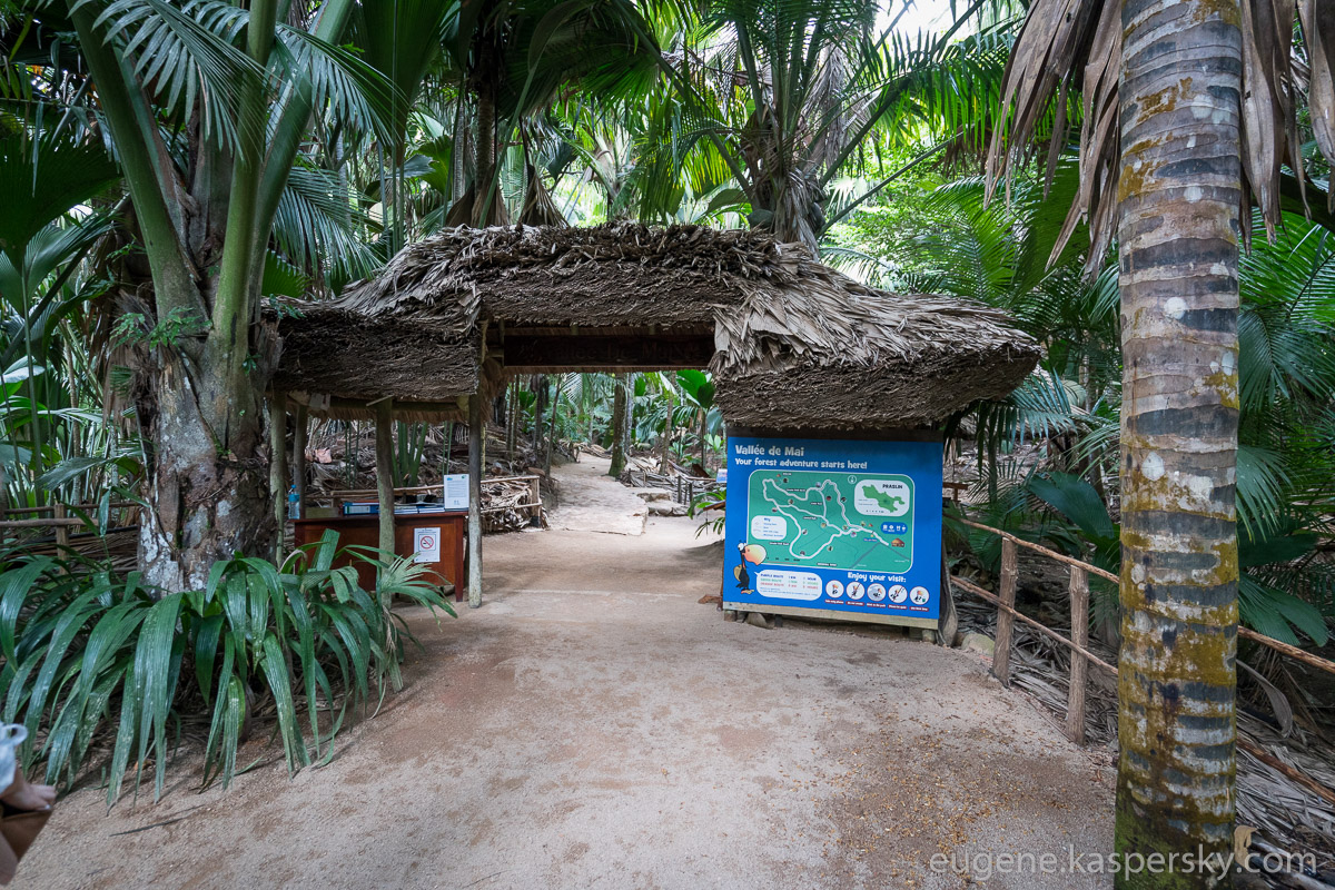 seychelles-coconut-4