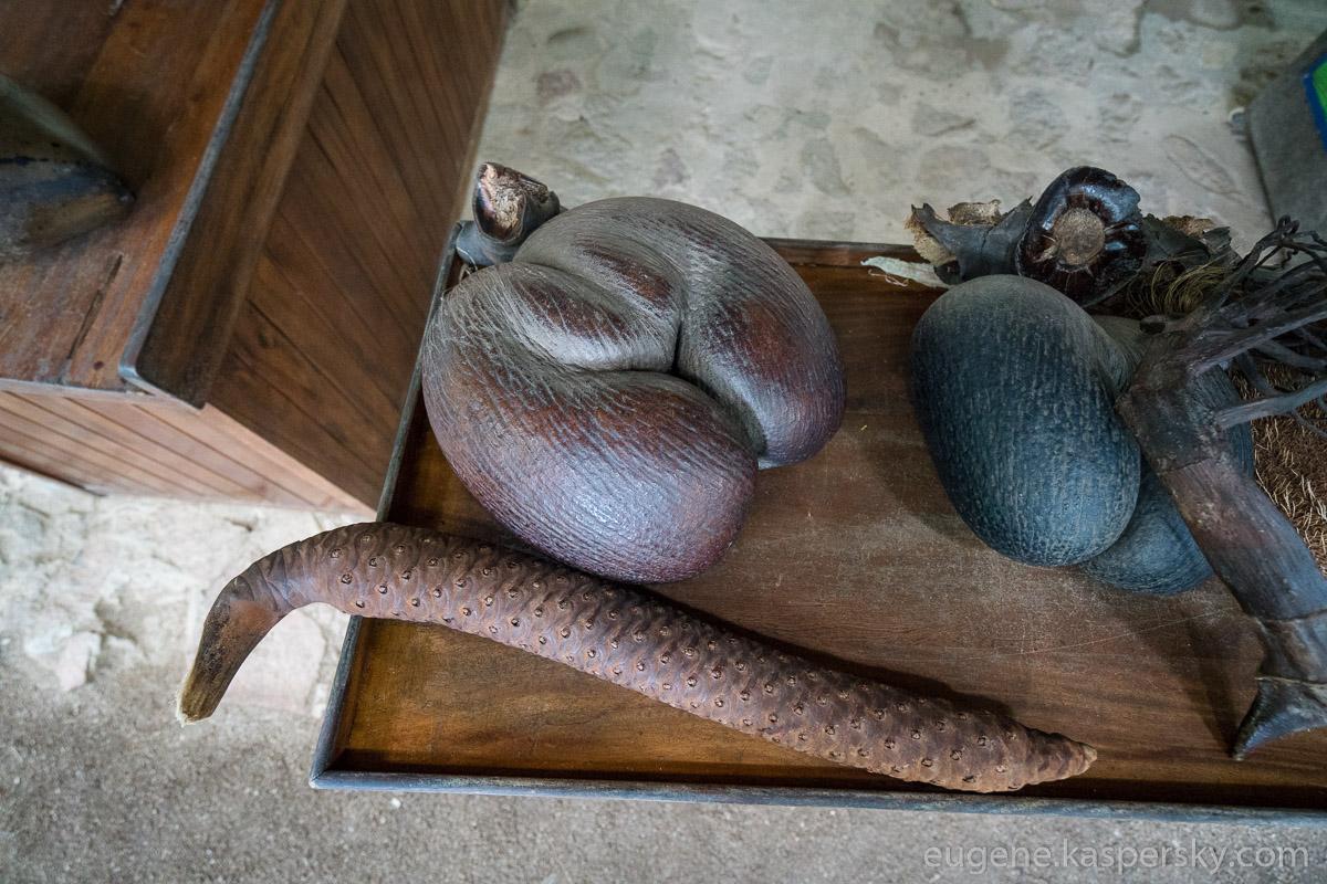 seychelles-coconut-10