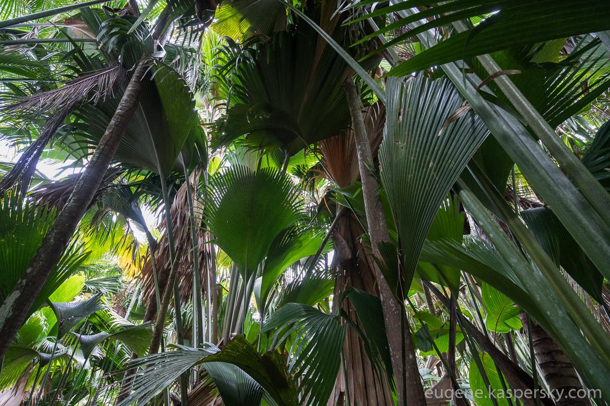 seychelles-coconut-14