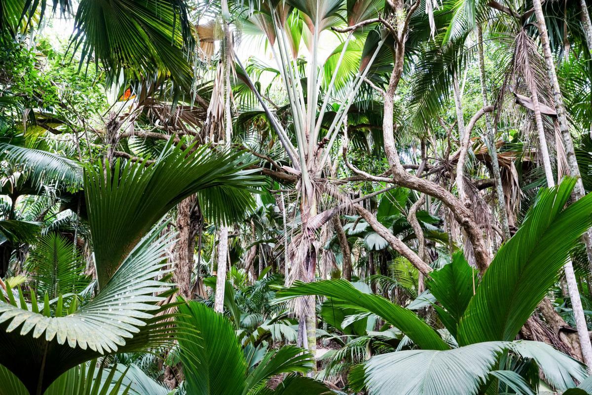 seychelles-coconut-16