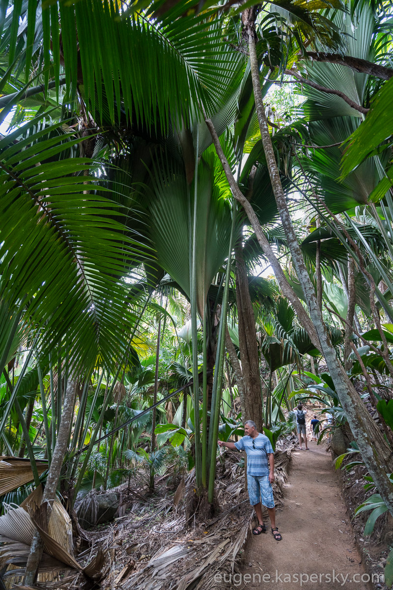 seychelles-coconut-19