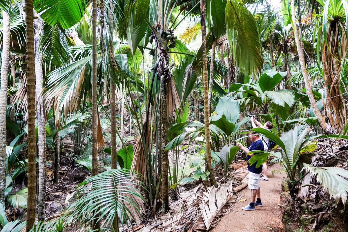 seychelles-coconut-21
