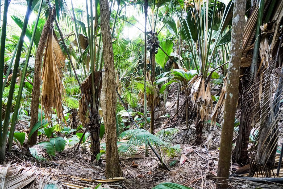 seychelles-coconut-22