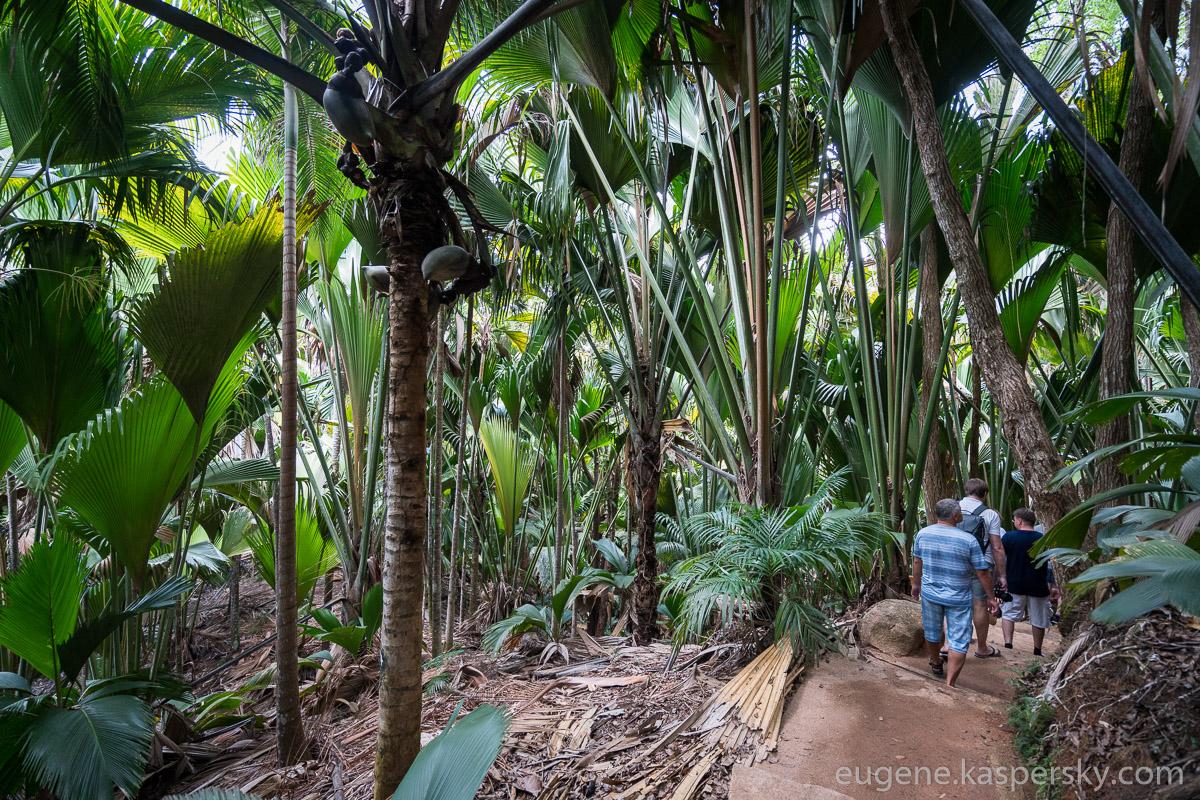 seychelles-coconut-24