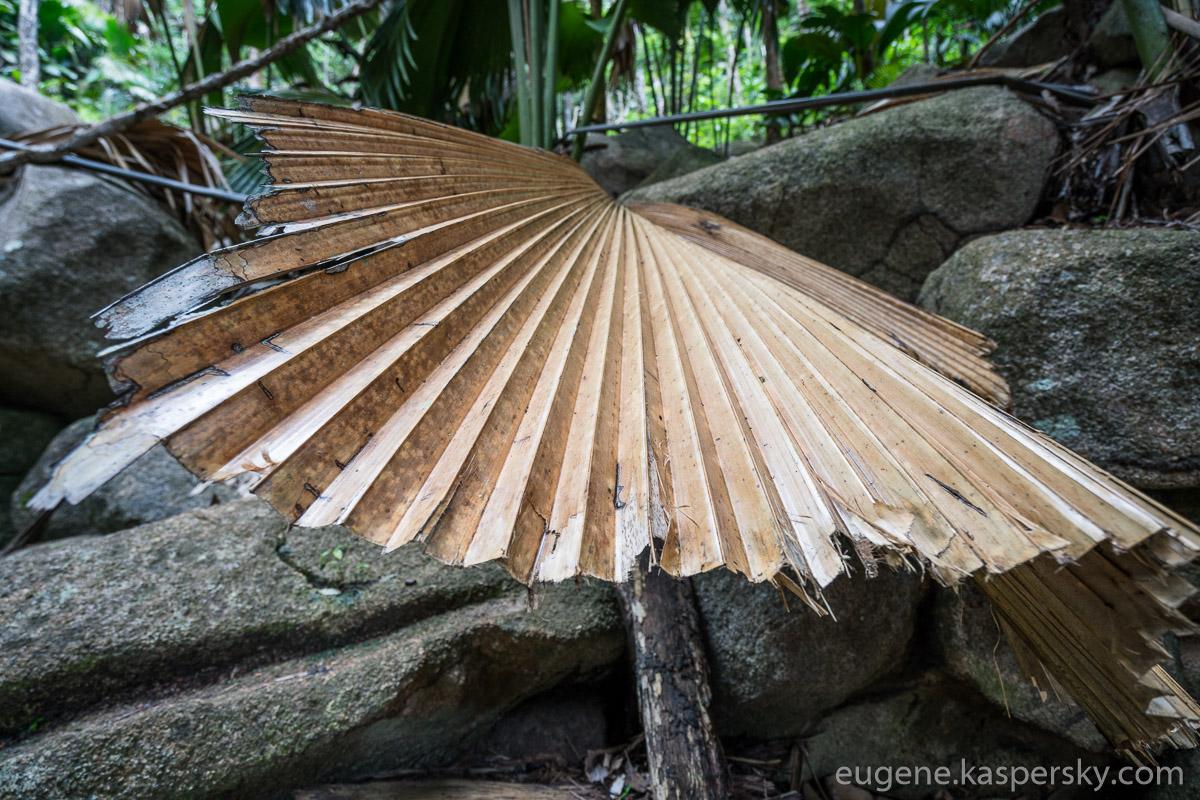 seychelles-coconut-25